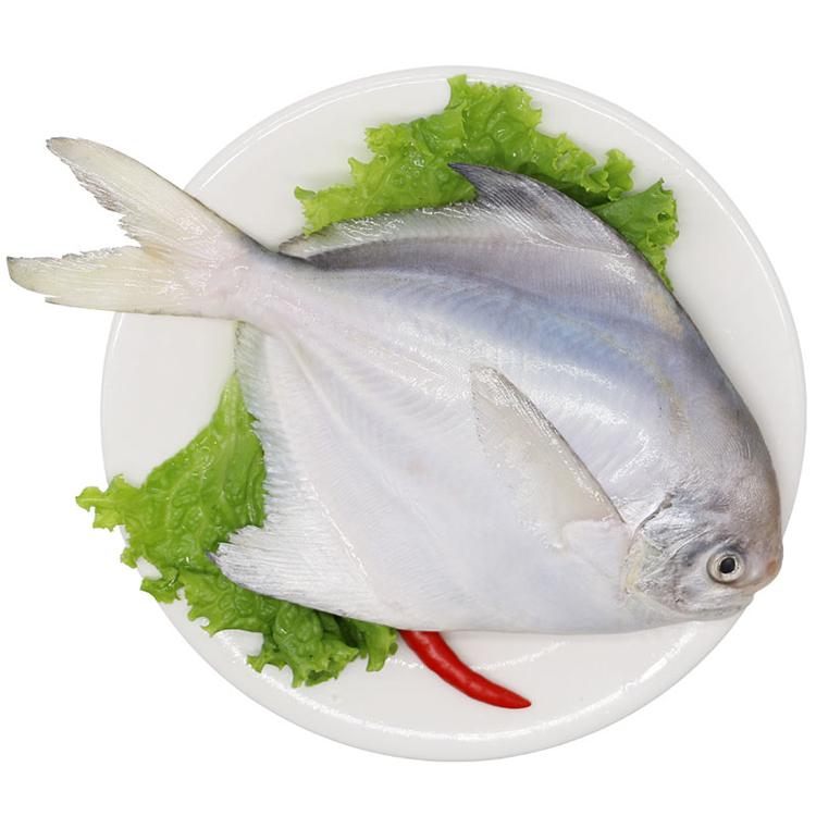 舟山东海鲳鱼1条装(300-400g/条)300g/袋