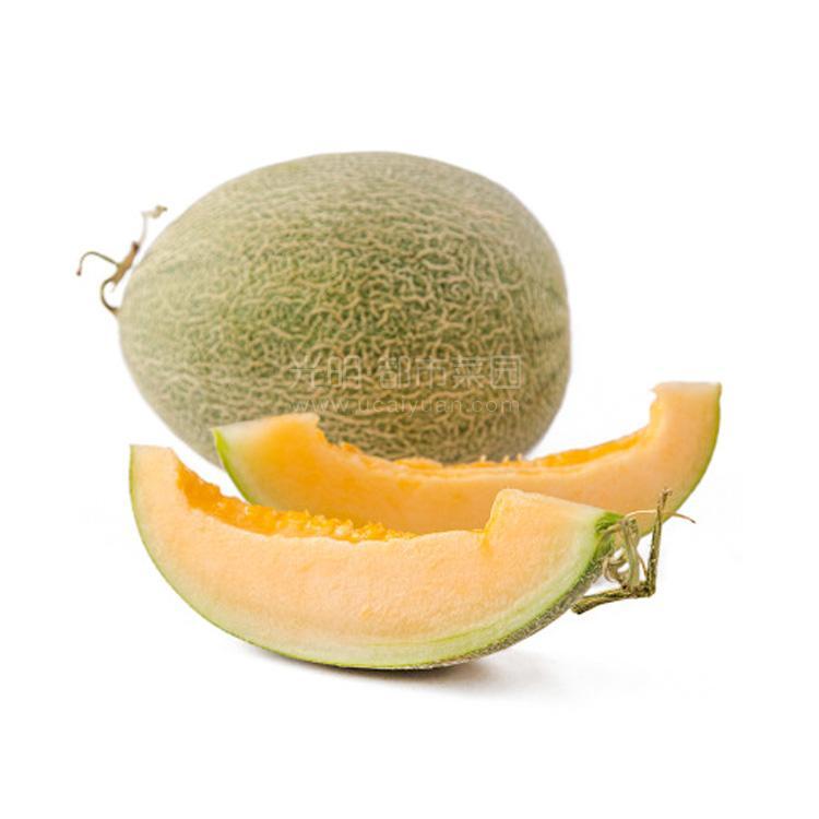 西州蜜瓜 1粒装约2200g